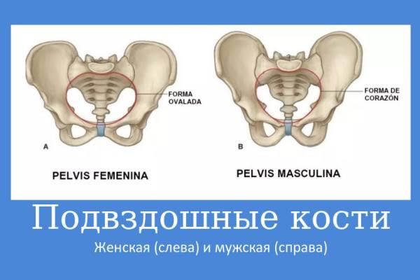 женские и мужские подвздошные кости