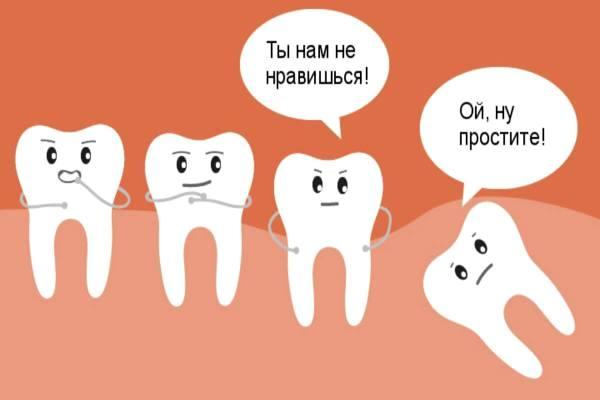 другие зубы и важность зуба мудрости