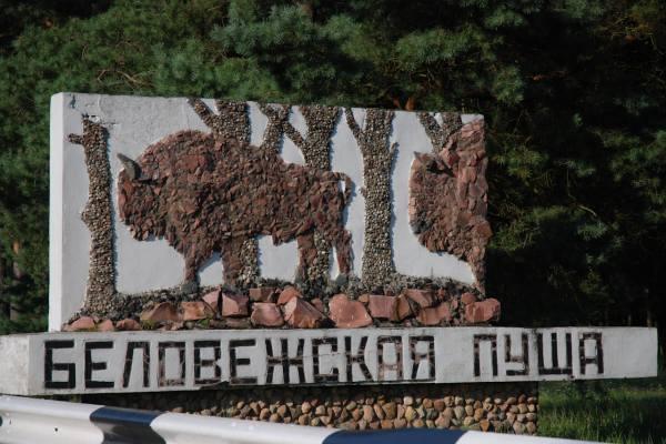 Беловежская пуща заповедник Беларусь находится