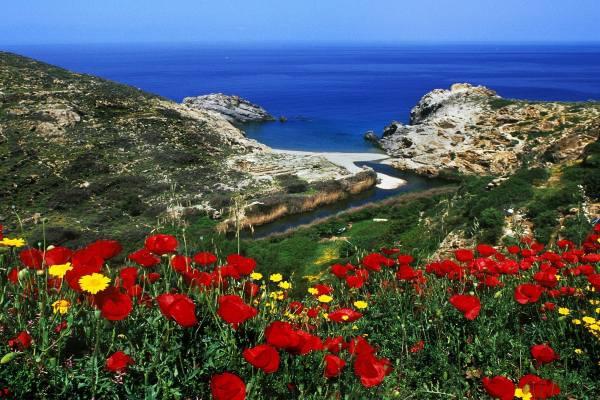 цветы и вид на море с горы на Кипре