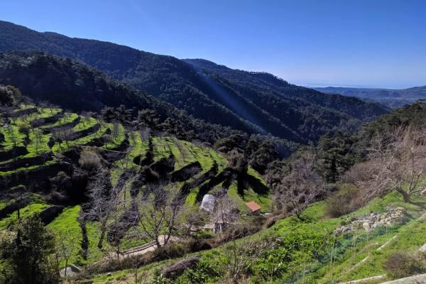 кипрские горные виноградники