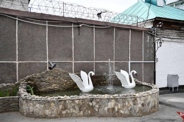 почему белый лебедь так называется